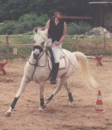 pferdetipps für kids